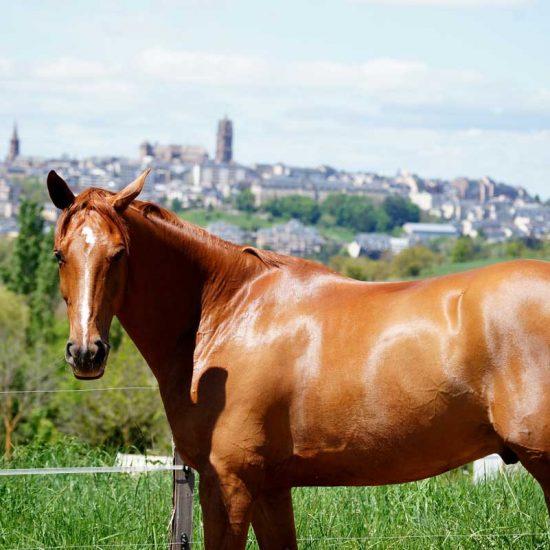 cheval_combelles_rodez
